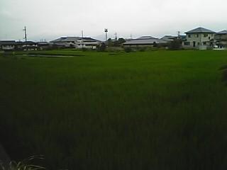 Phoryuji3.JPG