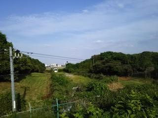 Pitamia5.jpg