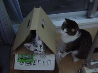 Pmezosuko.jpg