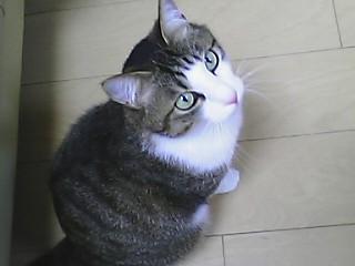 Psuemono.JPG