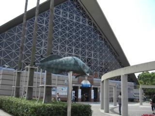 Psumasui3.jpg