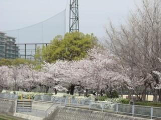 Ptutosaku2.jpg