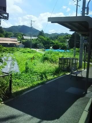 arimaneko0.jpg